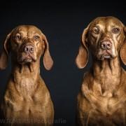 Hundefotograf in Berlin Nils Wiemer Wiemers